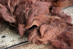 Raw Dark Brown Alpaca Fleece for Spinning - Faith