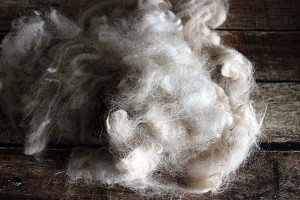 Raw Alpaca Fleece for Spinning - Pearl