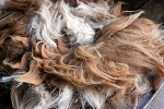 Raw Dark Fawn Alpaca Fleece for Spinning - Sharon